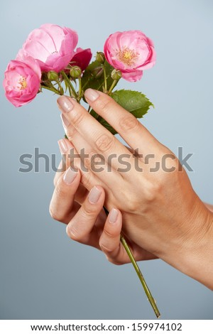 hands holding pink roses on blue background