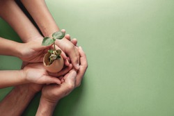 hands holding seedling in eggshells, montessori , CSR ,ESG, Eco green sustainable living,zero waste, plastic free, earth day, world environment day,responsible consumption, renewable energy