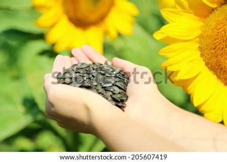 Hands holding sunflower seeds in field