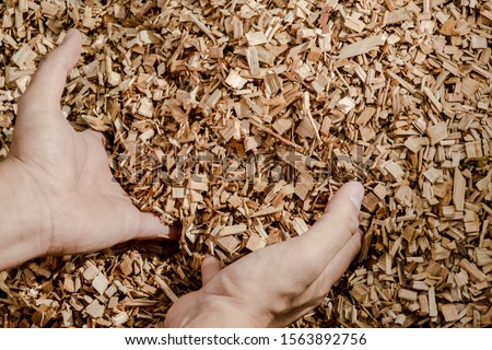 Hands holding wooden chips from eucalyptus trees as fuel for clean energy ストックフォト ©
