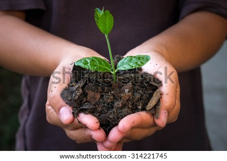 hands holding young plant. #314221745