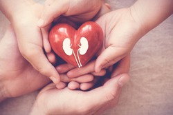 hands holiding red heart with kidney, world kidney day, National Organ Donor Day