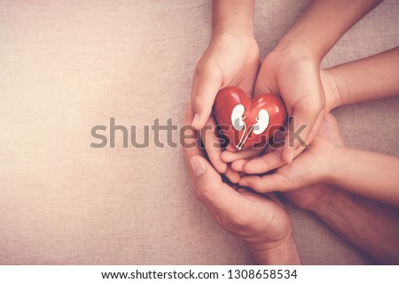 hands holiding red heart with kidney, world kidney day, National Organ Donor Day, charity donation concept