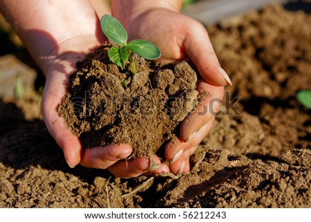 hands in dirt - stock photo
