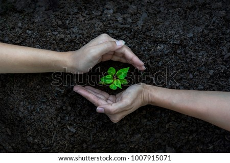 Hands kids Team work protecting sapling tree growing up and planting on land for reduce global warming earth, top view.    Agriculture Ecology Concept