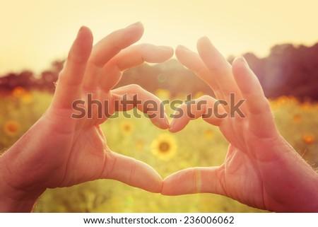 Hands making heart symbol in a field of sunflowers.  Instagram effect