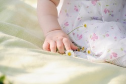 Hands of a one-year-old girl in summer. Tiny palms and daisies. Gentle child's hand. plump hands of a small child