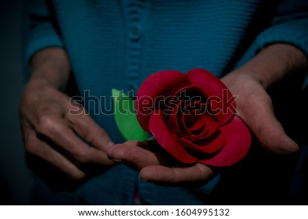 Hands of a woman delivering a rose as a gift or present for show of affection or affection.