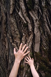 Hands of adult man and small child touching old bark on huge oak tree trunk. Love and protect nature concept. Green eco-friendly lifestyle. Vertical.