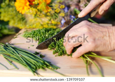 Hands of an elderly grandmother chopping fresh parsley from the garden for use in her cooking as she prepares the meal
