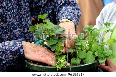 Hands of an elderly woman planting seedling in a plastic hanging basket.