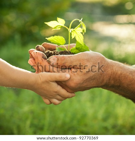 Shutterstock Hands of elderly man and baby holding a young plant against a green natural background in spring. Ecology concept