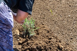 Hands of farmer growing and nurturing tree growing on fertile soil with green and brown background /nurturing baby plant / protect nature / Earth day concept