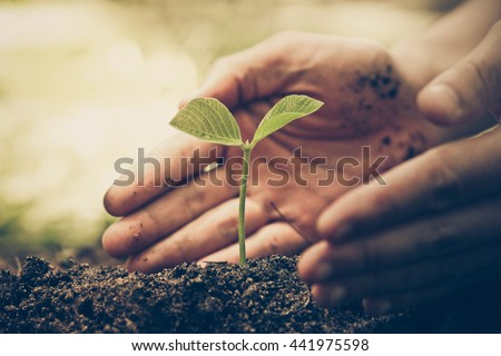Hands of farmer growing and nurturing tree growing on fertile soil with green and yellow bokeh background / nurturing baby plant / protect nature #441975598