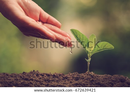 Hands of farmer growing and nurturing tree growing on fertile soil with green and yellow bokeh background / nurturing baby plant - Shutterstock ID 672639421