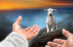 Hands of God reaching out to a lost sheep. Biblical theme concept.