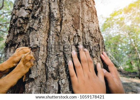 Hands of kid and his dog placed on the trunk of a big tree with fingers extended, symbolizing the connection between humans and nature. Concept nature and people.