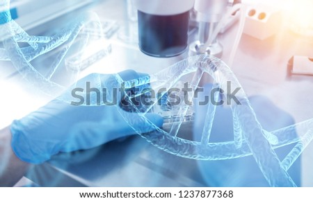 hands of scientist working with multichannel pipette and multi well plates / research technician with multipipette in genetic laboratory #1237877368