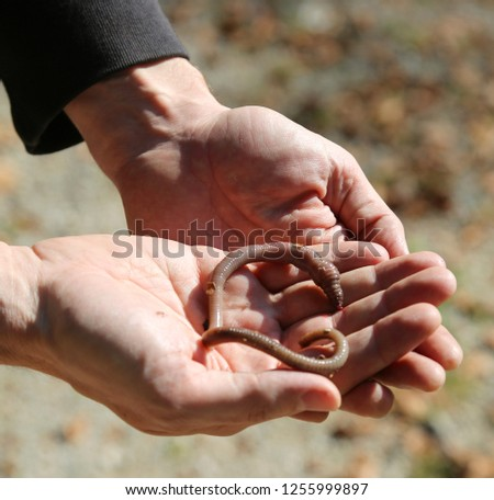 hands of the boy with a big earthworm