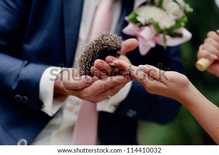 hands of the bride and groom hold a small prickly hedgehog