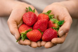 Hands of worker of contemporary vertical farm holding heap of fresh and clean red ripe strawberries