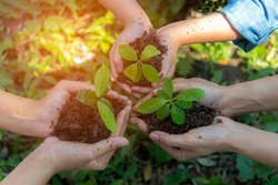 Hands People gardener and kidsTeam Work family Cupping  young tree Plant Nurture Environmental and reduce global warming earth, outdoor education. Ecology Concept