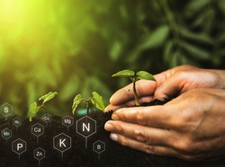 Hands planting seedling. Role of nutrients in plant life. Soil with digital mineral nutrients icon.