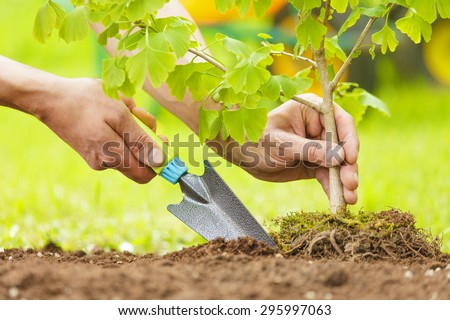 Hands Planting Small Tree with roots in a garden on green background