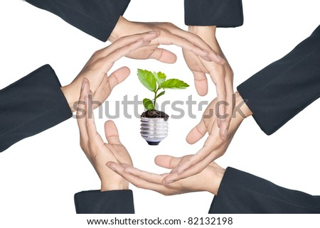 Hands protecting green plant, isolate on white background
