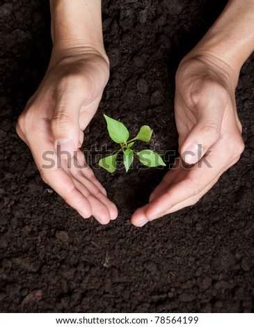 Hands protecting tree growing