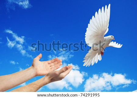 hands released into the blue sky to the sun a white dove