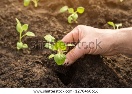 Hands seeding plants in garden	in sunlight close up. New life concept #1278468616