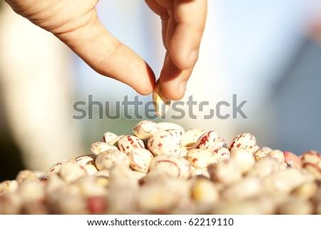 Hands selecting a bean (selective focus)