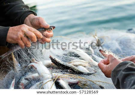 hands take fish out of a net