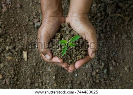 hands was carrying a bag of potting seedlings to be planted into the soil. - Shutterstock ID 744480025