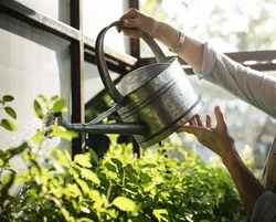 Hands watering plants with a metal can