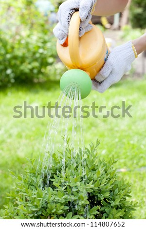 Hands watering the bush