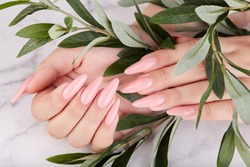 Hands with long artificial manicured nails colored with pink nail polish. Fashion and stylish manicure.