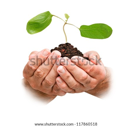 Hands with sapling