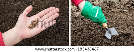 Hands with seeds and garden gloves that depict the process of planting seeds