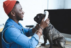 Handsome african american man wearing headphones on French bulldog on computer table