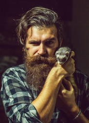 handsome bearded man hipster with stylish haircut and beard in checkered shirt has serious face, holds cute small polecat or ferret pet with grey fur
