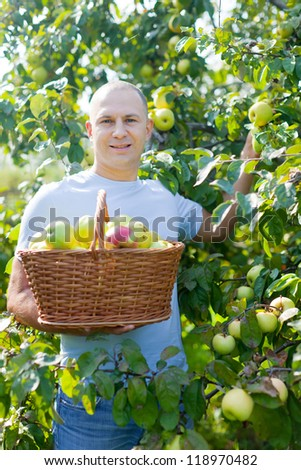 Handsome guy with basket of harvested apples in sunny garden