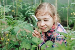 Handsome kid girl Naturalist Scientist Explores Plant Life and Insect Life with Magnifying Glass. Botanical scientist. Surveying of botanists. child studying plants in the greenhouse