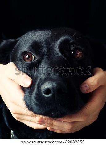 Handsome Labrador. man embracing his dog