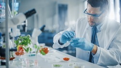 Handsome Male Microbiologist in Safety Glasses Examining Tomato's Locular Seed Cavities with Forceps and Putting a Sample in a Dish. Medical Scientist Working in a Modern Food Science Laboratory.