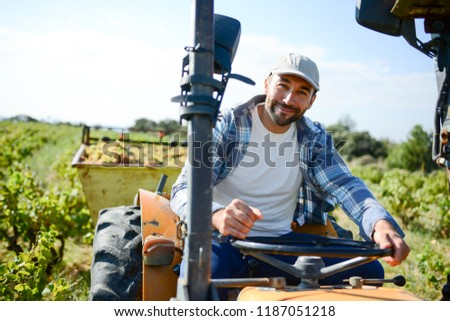 handsome man farmer in vine, driving tractor and harvesting grapes during wine harvest season in vineyard