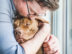 Handsome man hugging a charming puppy. Close-up, indoors. Studio photo, white color. Concept of care, education, obedience training and raising pets