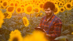 Handsome young farmer standing in the middle of a golden sunflower field smiling and making notes on his tablet during a majestic sunrise.
