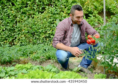 handsome young gardener growing organic bio vegetables  #435943450
